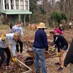 Volunteers cleaning up the garden