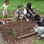 Garden Planting