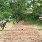 Tilling Community Garden